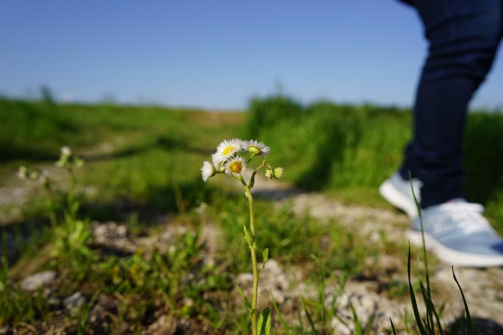 カールツァイスのBatis2/25単焦点広角レンズで撮影した写真例